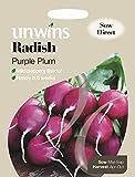 Unwins Pictorial pacco–ravanelli viola prugna–300semi