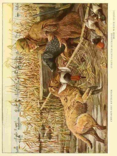 A4 Photo Fuertes Louis Agassiz 1874 1927 Book of Dogs 1919 Retrievers Print Poster (Retriever Dog Bird)