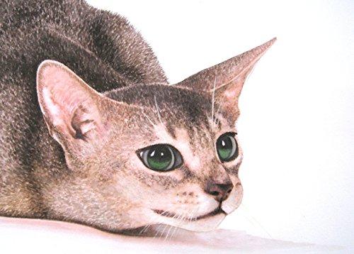 Abessinier Katze, handgemaltes und signiertes Aquarellbild.