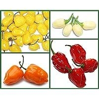 PlenTree Semillas caliente del caso de las semillas de la herencia Habaneros Habanero pimienta, 4 Pk Especial