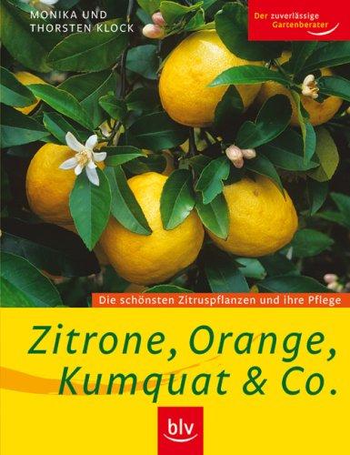 zitrone-orange-kumquat-co-die-schnsten-zitruspflanzen-und-ihre-pflege