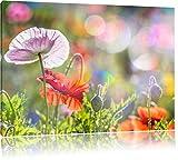 Pixxprint California Papavero in Primavera Stampa su Tela 80x60 cm Artistica murale