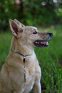 Sifflet de dressage pour chien–obéissance Formation & écorce de comportement–Outil d'entraînement pour chiens–Sifflet à arrêter d'aboyer