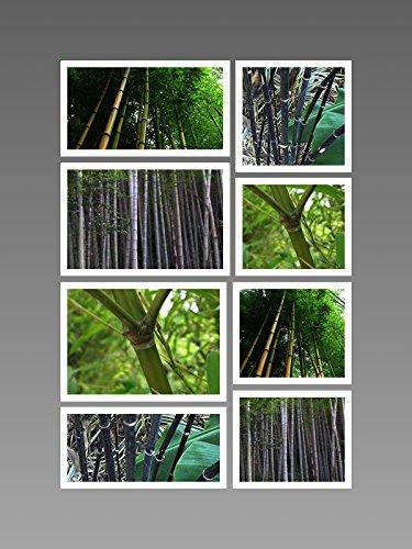 Winterharter Riesen-Bambus Mix ★ ★ ★ 115+ Samen - 4 Sorten ★ ★ ★ (Bambus Golden)