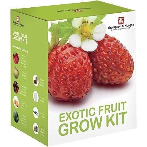 exotique fruitiers graines Kit en culture boite cadeau par Thomspon & MORGAN - 5 fruités Goûts à Grow ; fraises, melon, cerises tomate, Physalis & concombre graines