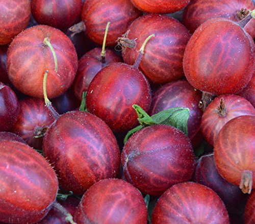 OBI Rote Früchte