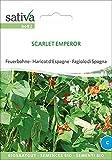 Feuerbohnen Scarlet Emperor | Bio-Bohnensamen