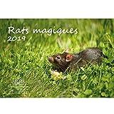Rats Magique · 29,7cm x 21,0cm · PREMIUM Calendrier 2019· Rats · Animal Domestique · Lapin · Lapin · rongeur · Édition âme Magique