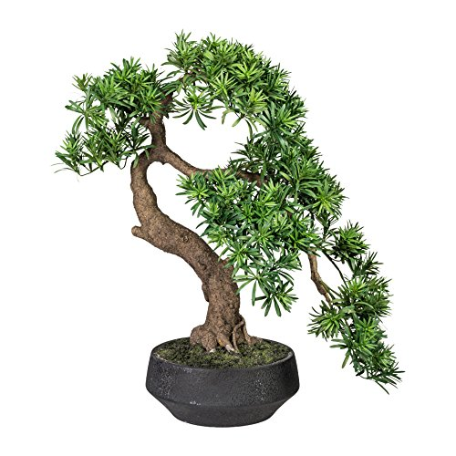 wohnfuehlidee Kunstpflanze Bonsai Podocarpus Han-kengai Grün, Inklusive Keramik-Schale, Höhe ca. 75 cm