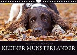 Faszination Jagdhund - Kleiner Münsterländer (Wandkalender 2020 DIN A4 quer)