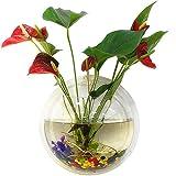 Tinksky Fish Tank Wand hängenden Clear Glas Vase Blume Pflanze Topf Aquarium Bowl-Startseite-Dekoration 15 cm ...