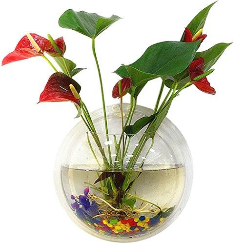(Tinksky Fish Tank Wand hängenden Clear Glas Vase Blume Pflanze Topf Aquarium Bowl-Startseite-Dekoration 15 cm …)
