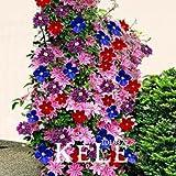 I semi Big Bonsai Clematis Bulbi Wire Lotus Impianti Multicolor Clematis Arrampicata piante Semi 50 PCS / Lot, # ATK9ST