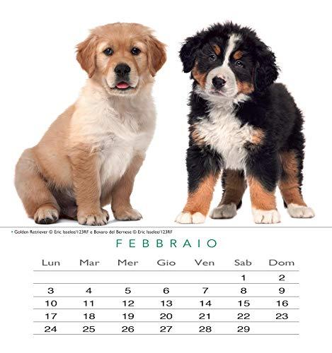 Zoom IMG-2 edizioni calendario cani 2020 da