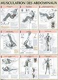 Musculation des abdominaux : Poster