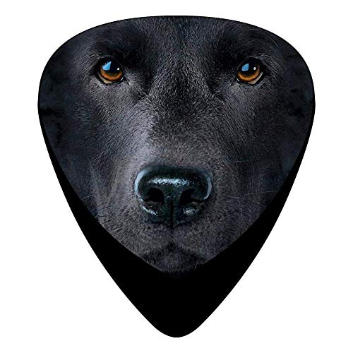 Black Lab Face Guitar Picks Celluloid Cool Boys Complete Assorted 12 Pack Zombie Lab