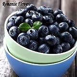 100 particelle / Bag frutta e verdura Semi mirtillo Seeds Black Pearl Mirtilli fai da te countyard Bonsai Piante Semi