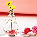 JUNGEN Vase en Verre Transparent Vase Air Plant Terrarium Succulent Planter Conteneur
