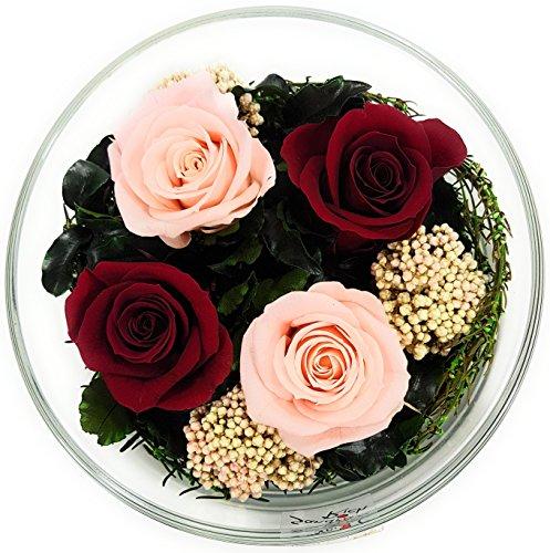 Rosen-te-amo Konservierte Blumen aus ECHTE Rosen - Blumen-Strauss in der Vase, aus 4 haltbare-Rosen – unser Blumen-Arrangement ist lange haltbar – Geschenk für die Frau (Rund, Mehrfarbig-Rosa-Dunkelrot)