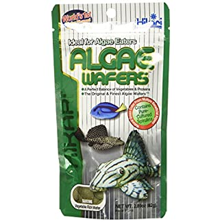Hikari Algae Wafers [Sng] 82G 16