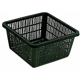 Square Aquatic Basket 30cm 51A234XkKpL