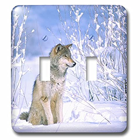 3dRose lsp_83897_2 Timber Wolf Sitting in The Snow, Canis Lupus