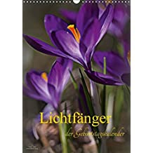 Lichtfänger (Wandkalender 2017 DIN A3 hoch): Wunderschöne Lichtmomente - Die Welt der Blumen und Pflanzen in sehr zarten lichtdurchfluteten Detailaufnahmen (Geburtstagskalender, 14 Seiten )