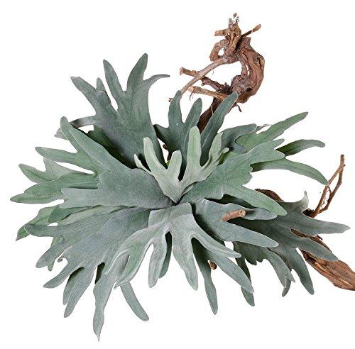 artplants Set 2 x Künstlicher Geweihfarn TENUK auf Steckstab, grün, 50 cm, Ø 70 cm – kunstpflanze/Deko Pflanze