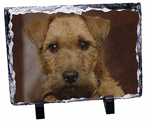 Lakeland Stein (Lakeland-Terrier-Rock-Foto auf Schieferplatte)