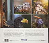 FRANZIS Through the Lens: Eulen & Greifvögel fotografieren | Ein Buch für Elsen von Eulen - Tanja Brandt