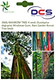 DCS (068) RAINBOW TREE 4 seeds (Eucalypt...