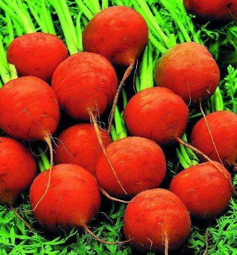 carotte Marché Paris - environ 1500 Graines - Légumes