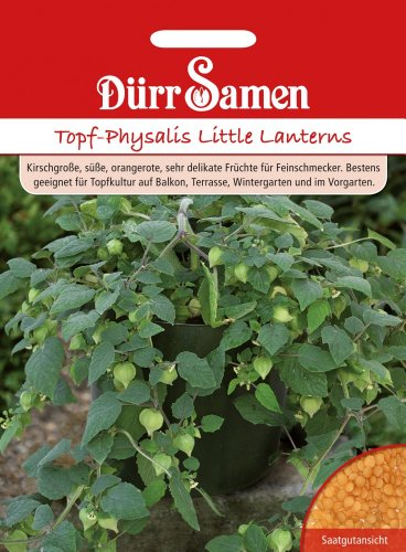 Dürr-Samen Topf-Physalis Little Lanterns
