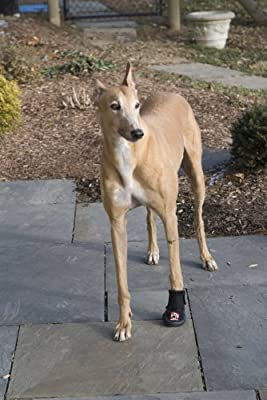 Thera-Paw Padded - Size TE Often purchased for Greyhound Dogs by Westcoast