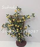 SwansGreen 10 PC Silk Kletterrose Blumensamen Bonsai Efeu-Rebe Hängen Schöne Staude Blumen Garland Dekoration-Partei Haus 2