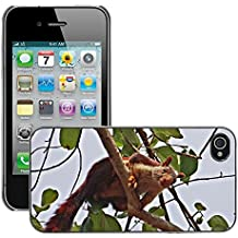Just Phone Cover Carcasa Funda Prima Delgada SLIM Casa Case Bandera Cover Shell para // M00139976 Malabar scoiattolo gigante Ratufa // Apple iPhone 4 4S 4G