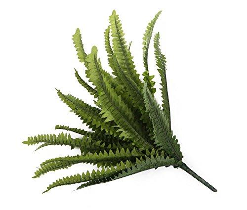 Closer To Nature 30cm Boston Farn Plug Betten Pflanze - 2