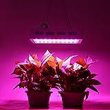 LED Pflanzenlampen 20000 lm AC 85-265 V, Befied Grow Lampe UV+ IR Gewächshaus Vollspektrum Pflanzen Veg & Blume Wasserfest Rot Blau300/600/1000W (1000w)