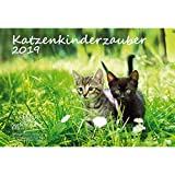 Katzenkinderzauber · DIN A4 · Premium Kalender 2019 · Katzenkinder · Katzenbabys · Katzen · Stubentiger · Tier · Edition Seelenzauber