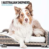 Australian Shepherd 2018Moderner Wand-Kalender