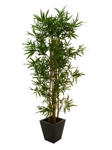 Euro Palms 82509237 Bambus Multistamm, 210 cm