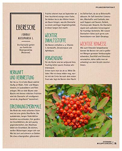 Kräuterkauz: Die faszinierende Welt der essbaren Wildpflanzen - 12
