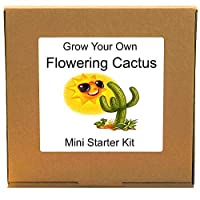 Grow Your Own Colourful Flowering Cactus Plant Kit - Unusual, Unique and Quirky Complete Beginner Friendly Indoor Gardening Gift for Men, Women or Children