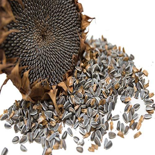 Vogelfood Semi di girasole a strisce, 25 kg