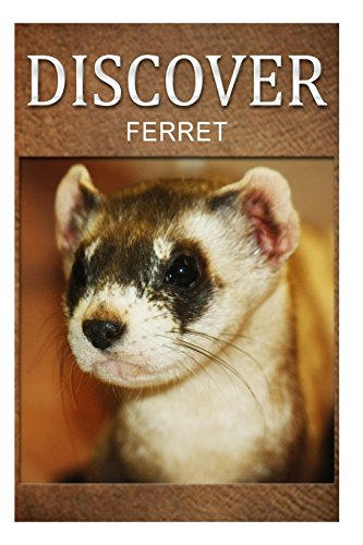 Ferret - Discover: Early reader's wildlife photography book