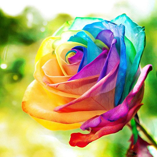 5D DIY Diamond Painting by Numbers Kits, Crystal Full Drill Embroidery Cross Stitch Rhinestone Mosaic Drawing Art Craft Home Wall Decor, Rose 11.8*11.8 Inch