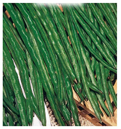 Inception Pro Infinite 200 C.ca Semi Fagiolo Nano Verde Mangiatutto Dolico Pinto - Dolichos melanopthalmus In Confezione Originale Prodotto in Italia - Fagioli nani verdi