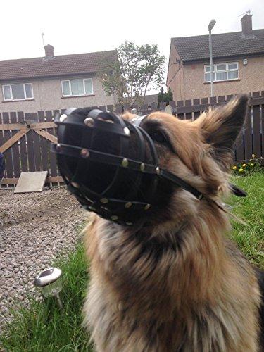 Champion Maulkorb für Hunde, leichtes Leder