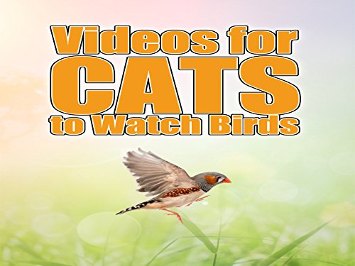 Videos for Cats to Watch Birds Cover