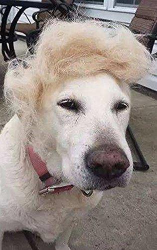 Trump Stil Hund Perücke Haustier Kostüm, Donald Cat Head Wear Bekleidung Spielzeug für Halloween, Weihnachten, Partys, Festivals von Fuji
